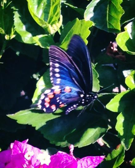 Colorful butterflies abound in the wildflowers at Zoëtry Casa del Mar.