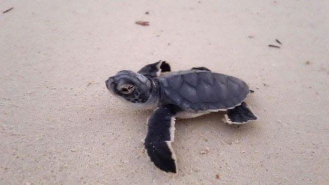 If you're lucky, you may get to witness a turtle release at Zoëtry Paraiso de la Bonita.