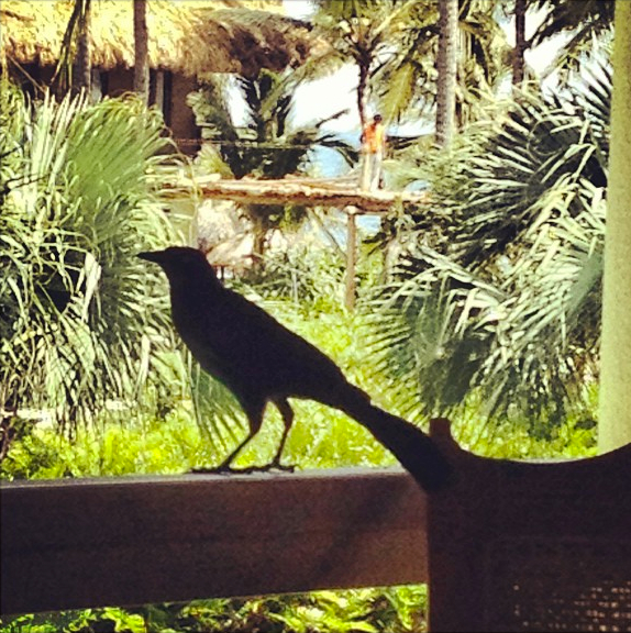 Just a small sampling of the wildlife that surrounds Zoëtry Agua Punta Cana.
