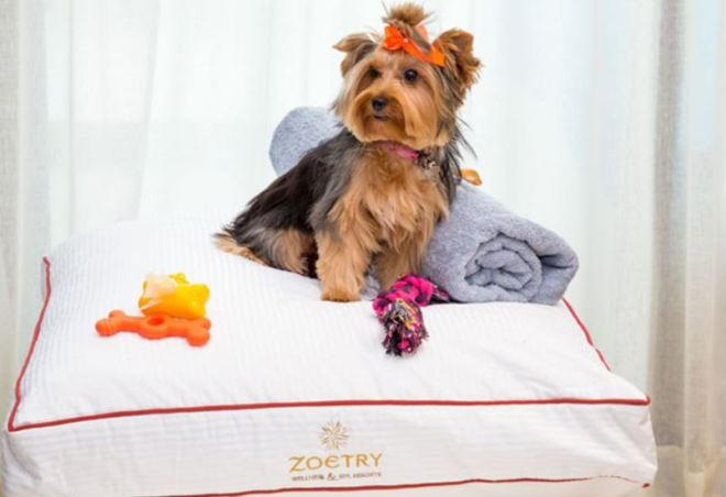 Zoetry_PetFriendly